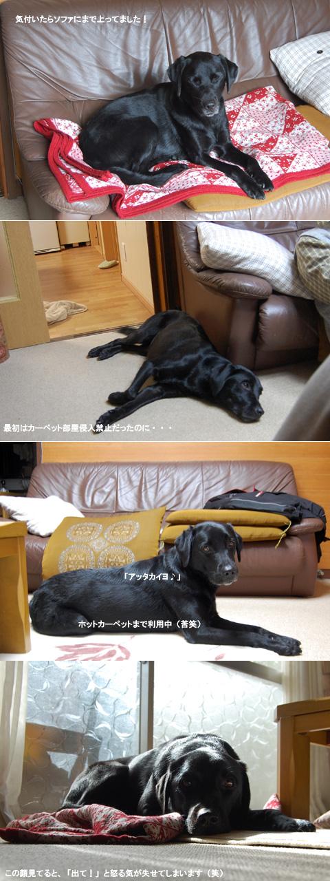 11.1サンク三昧.jpg