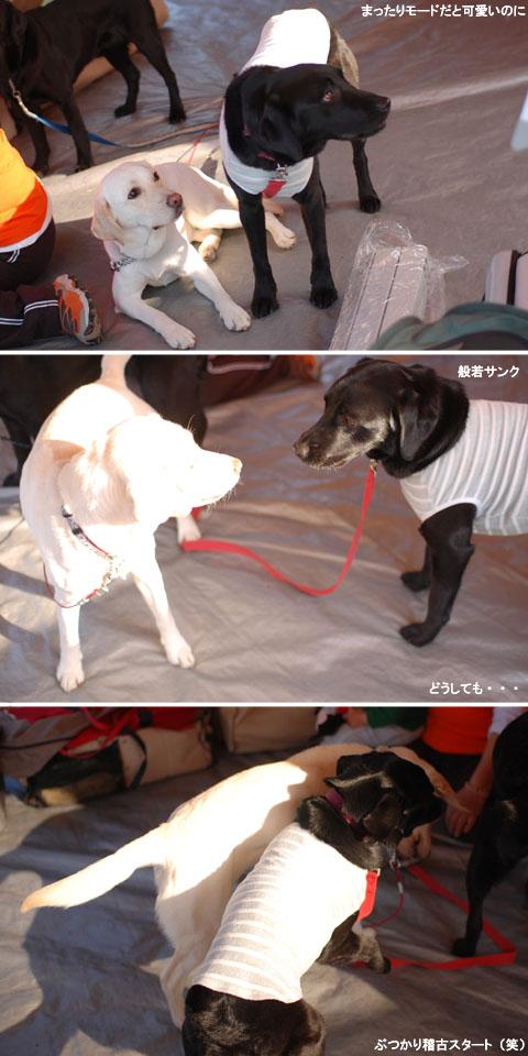 2009.4.4&5香川大会.jpg