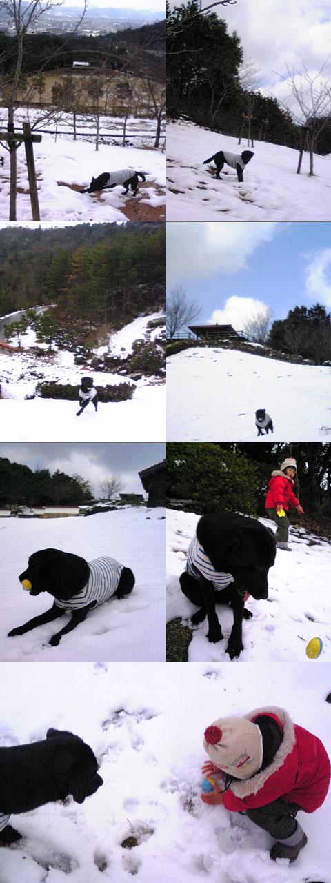 3.11雪山な裏山.jpg